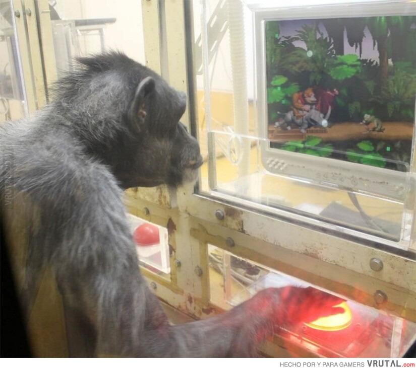 Resultado de imagen de monkey playing video games