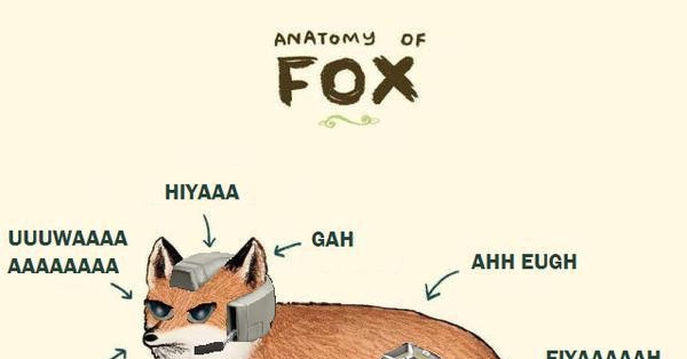 VRUTAL / Anatomía de un zorro común