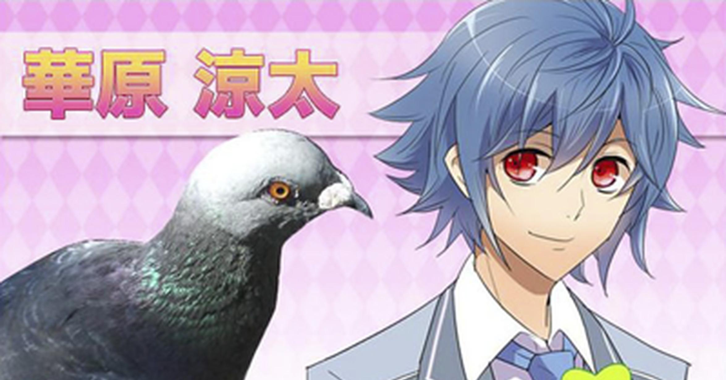Pigeon dating sim Hatoful Boyfriend snuggles up to Steam ...